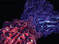 BioLuminate Thumbnail